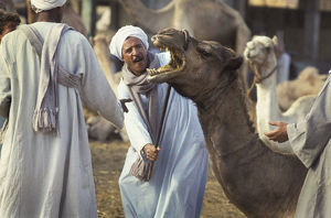 photography philip dunn/camel traders birqash cairo egypt