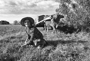 photography philip dunn/woman cow cart portugal 1