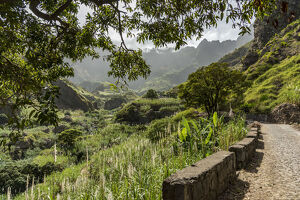 new/20191004 awl 3/africa cape verde santo antao ancient road