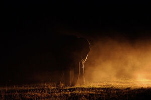 new/20191004 jai 5/elephant dust spotlight ol pejeta kenya