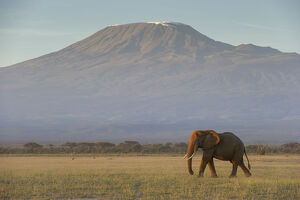 new/20191004 jai 5/elephants mount kilimanjaro dawn amboseli kenya