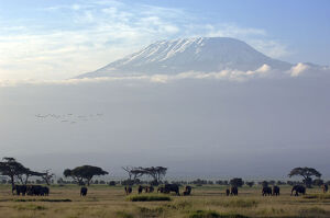 new/20191004 jai 5/elephants mount kilimanjaro kenya